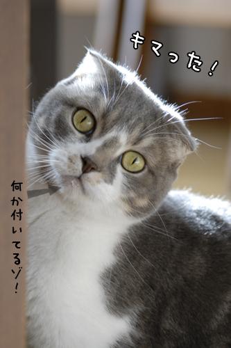 20090127_a