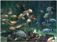 色とりどりの魚たち