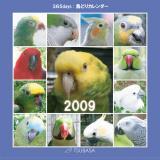 TSUBASA 365days 鳥どりカレンダー