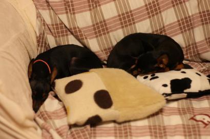 シータ姉さんとnanaちゃんも仲良くソファでお休み中