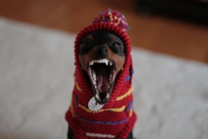 ナナスティッチの歯はするどい?