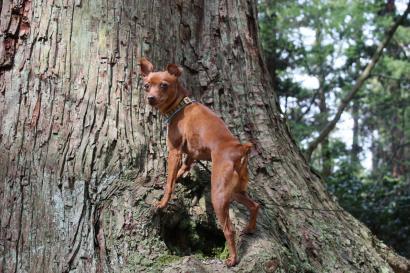 木登りしてみる