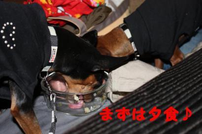 シータちゃんモコちゃんお食事タイム