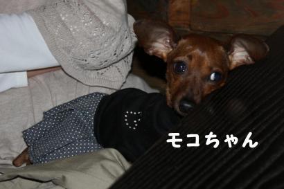 モコちゃんはdonaさんの膝の上
