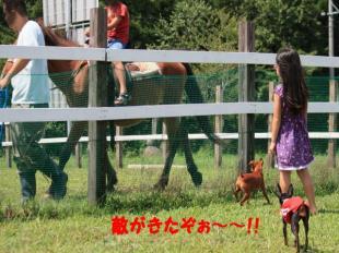 馬と戦うミニピン's