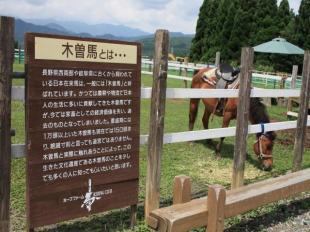 乗馬体験とドッグラン