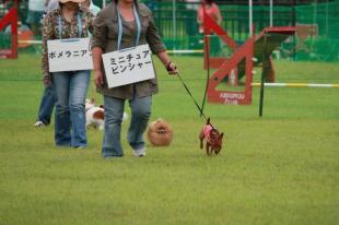 犬の品種紹介での様子
