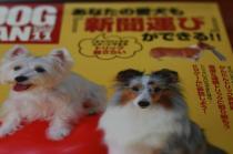 dogfan11月号