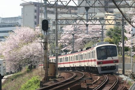 shintetu sakura1