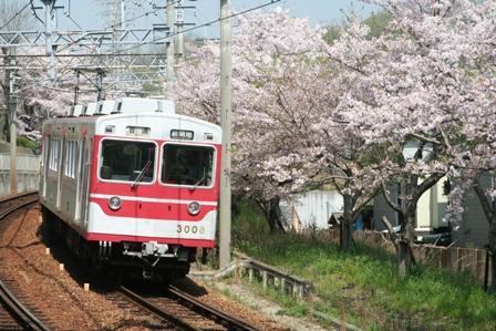 shintetu sakura3