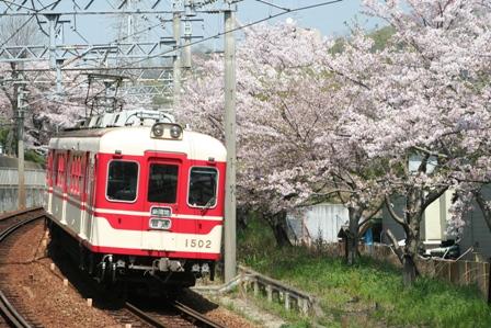 shintetu sakura4