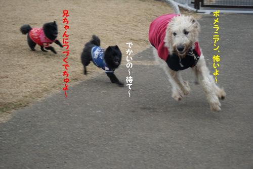12_20091226221101.jpg