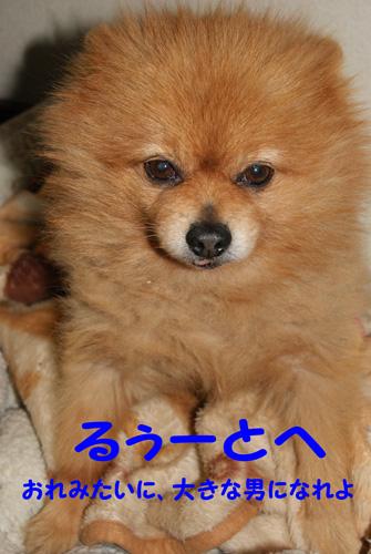 21_20100117210747.jpg