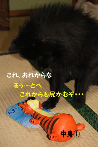 23_20100117210735.jpg