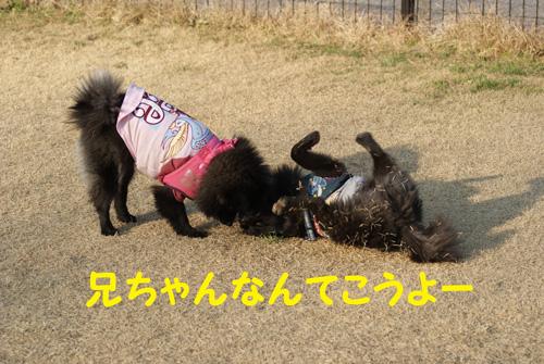 2_20100104201030.jpg