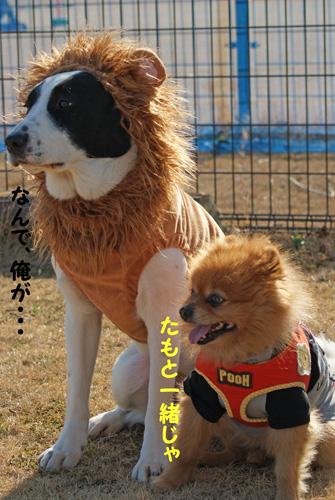 3_20100124182939.jpg