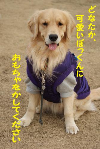9_20100124190123.jpg