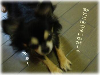 image_20071218223412.jpg