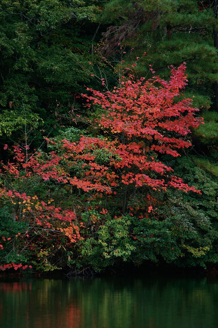 秋の大山 大野池 紅葉