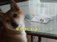 4_20090106175755.jpg
