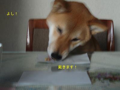 5_20090106175805.jpg