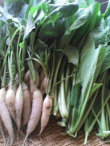 小松菜と二十日大根
