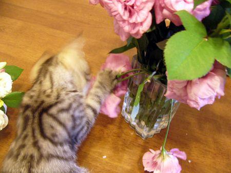 お花とタビィ