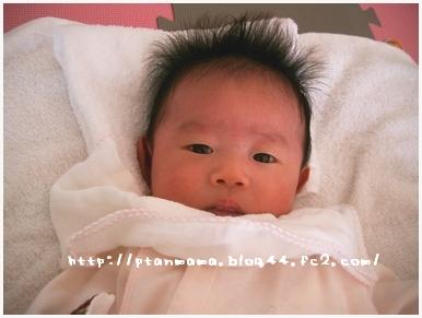 CIMG0086_20100110202952.jpg