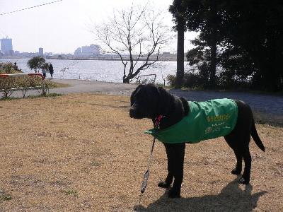 江戸川で…