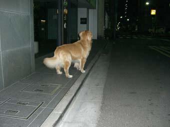 daichan-doko0420.jpg