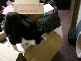 daifuku-check0319.jpg