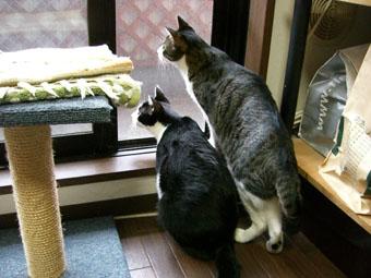 daifuku-mado0514.jpg