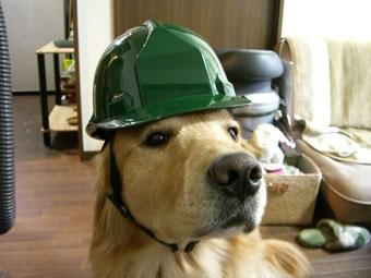 helmet0112.jpg