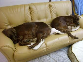 liru-rum-sofa0509.jpg
