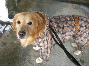 q-raincoat0515.jpg