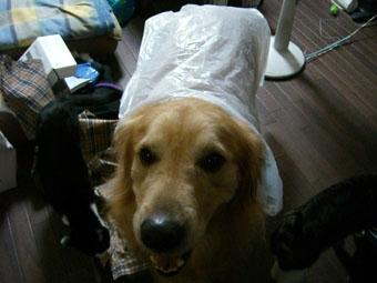 q-raincoat0717.jpg