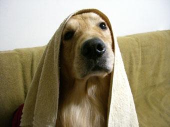 q-towel.jpg