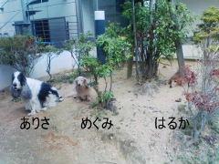 PA0_0113.jpg