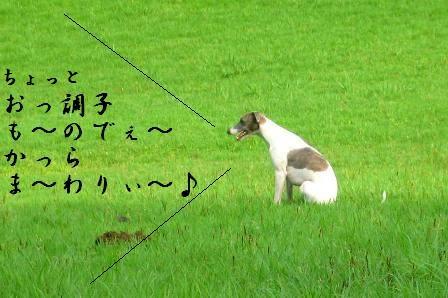kouka_1.jpg
