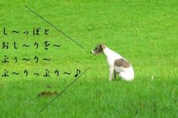 kouka_4.jpg