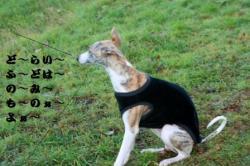 kouka_b1.jpg