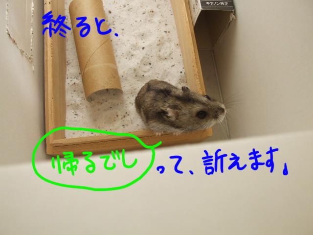 DSCF1323a.jpg