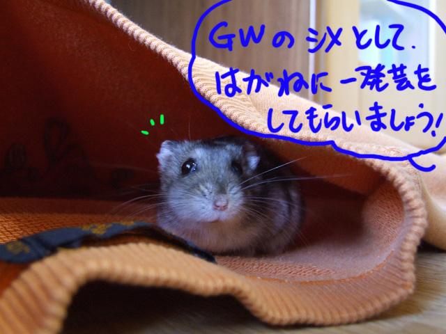 DSCF13591.jpg