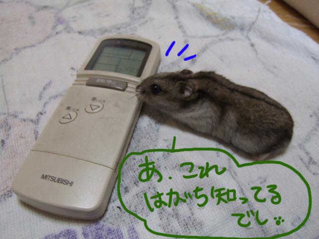 DSCF13938.jpg