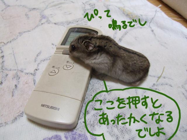 DSCF13939.jpg