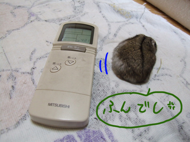 DSCF13943.jpg