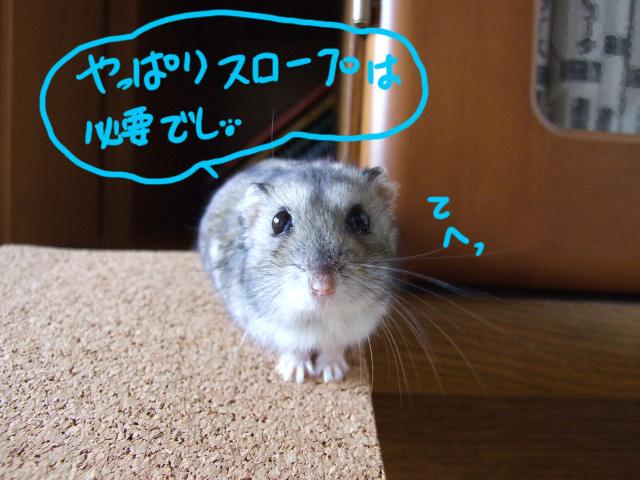 DSCF14269a.jpg