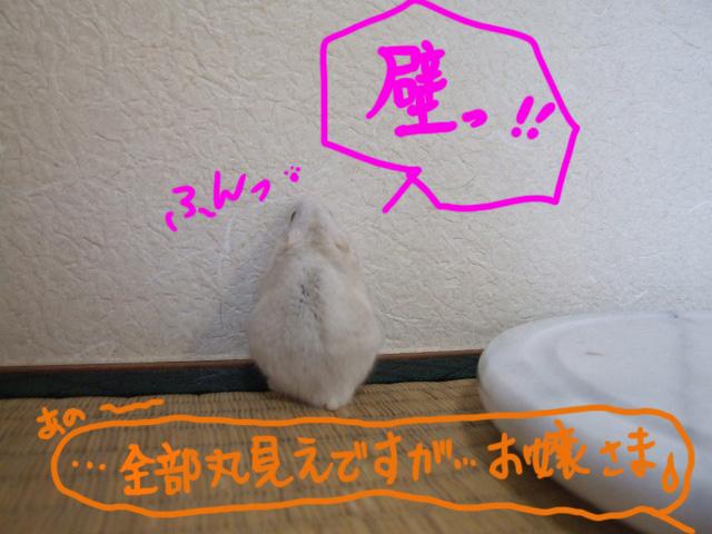 DSCF1677a.jpg