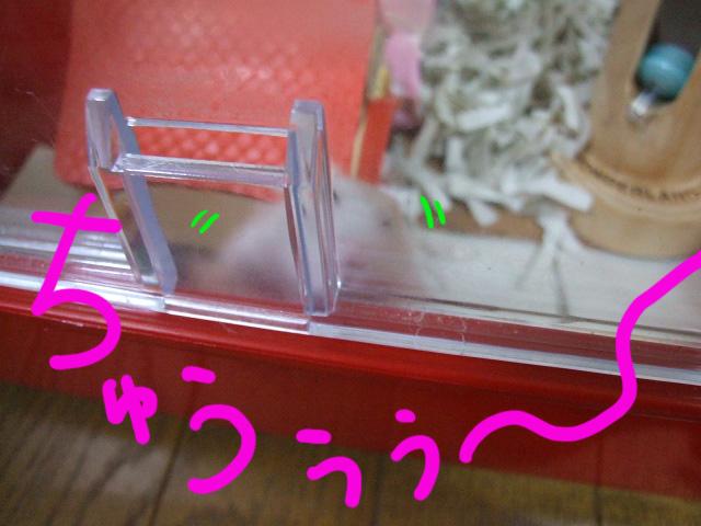 DSCF3000a.jpg