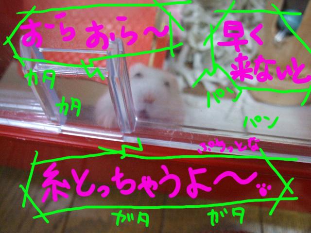 DSCF3001b.jpg